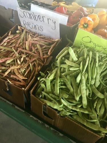 Green Bean Oakley California