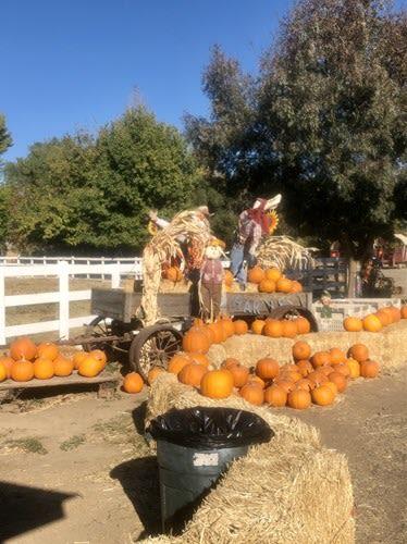 SFF Pumpkins