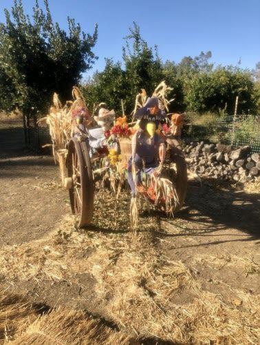 SFF Scarecrows