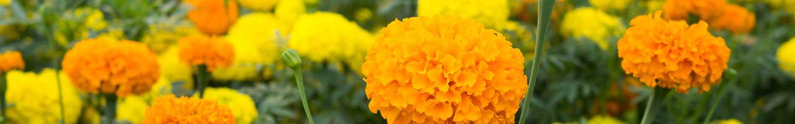 Events & Newsletters at Blossom Vale Senior Living in Orangevale, California.