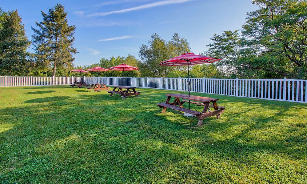 Picnic area at The Meadows Apartments in Syracuse, New York