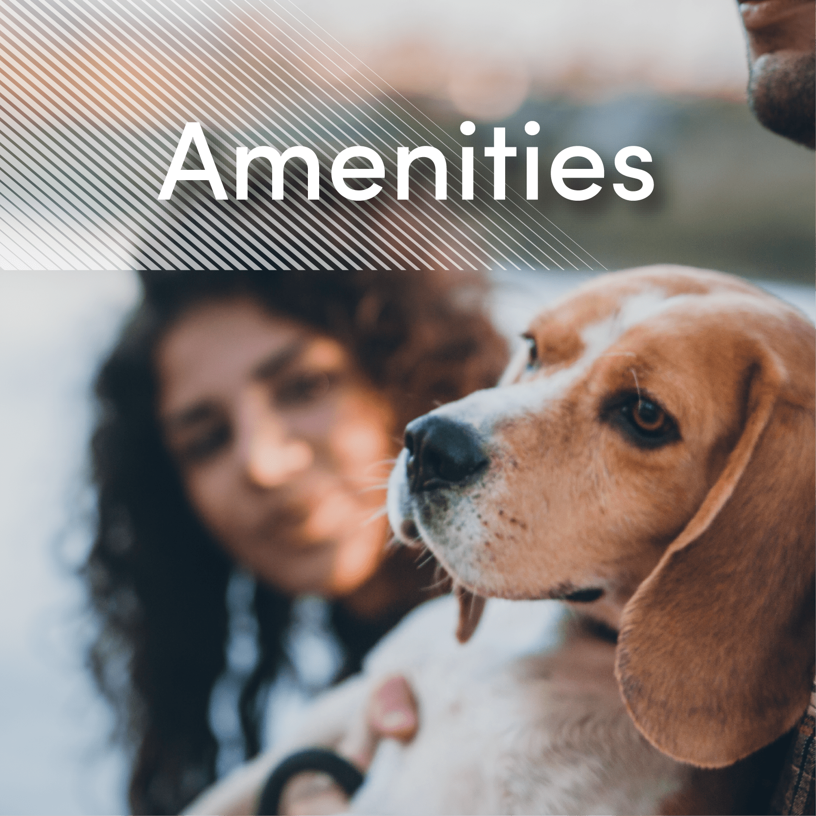 Link to amenities page of Amber Park in Sacramento, California