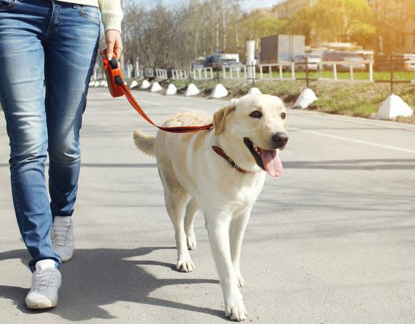 Woman walking her dog in Aberdeen, Maryland near Fairbrooke Senior Apartments