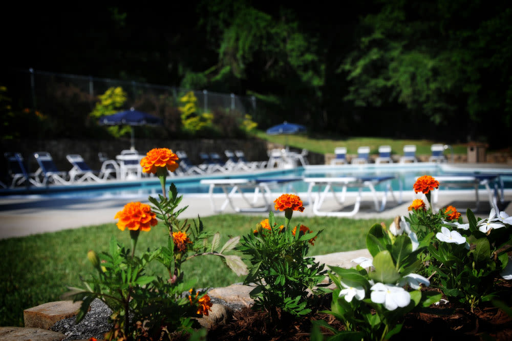Pool and flowers at Salem Wood Apartments in Salem, Virginia
