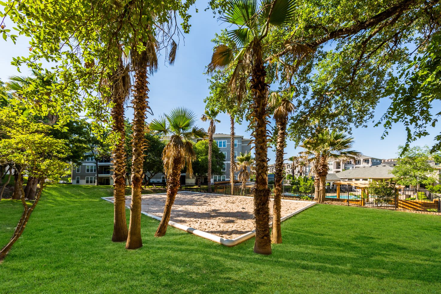 Outdoor sand court nestled between palm trees at Marquis at Crown Ridge in San Antonio, Texas