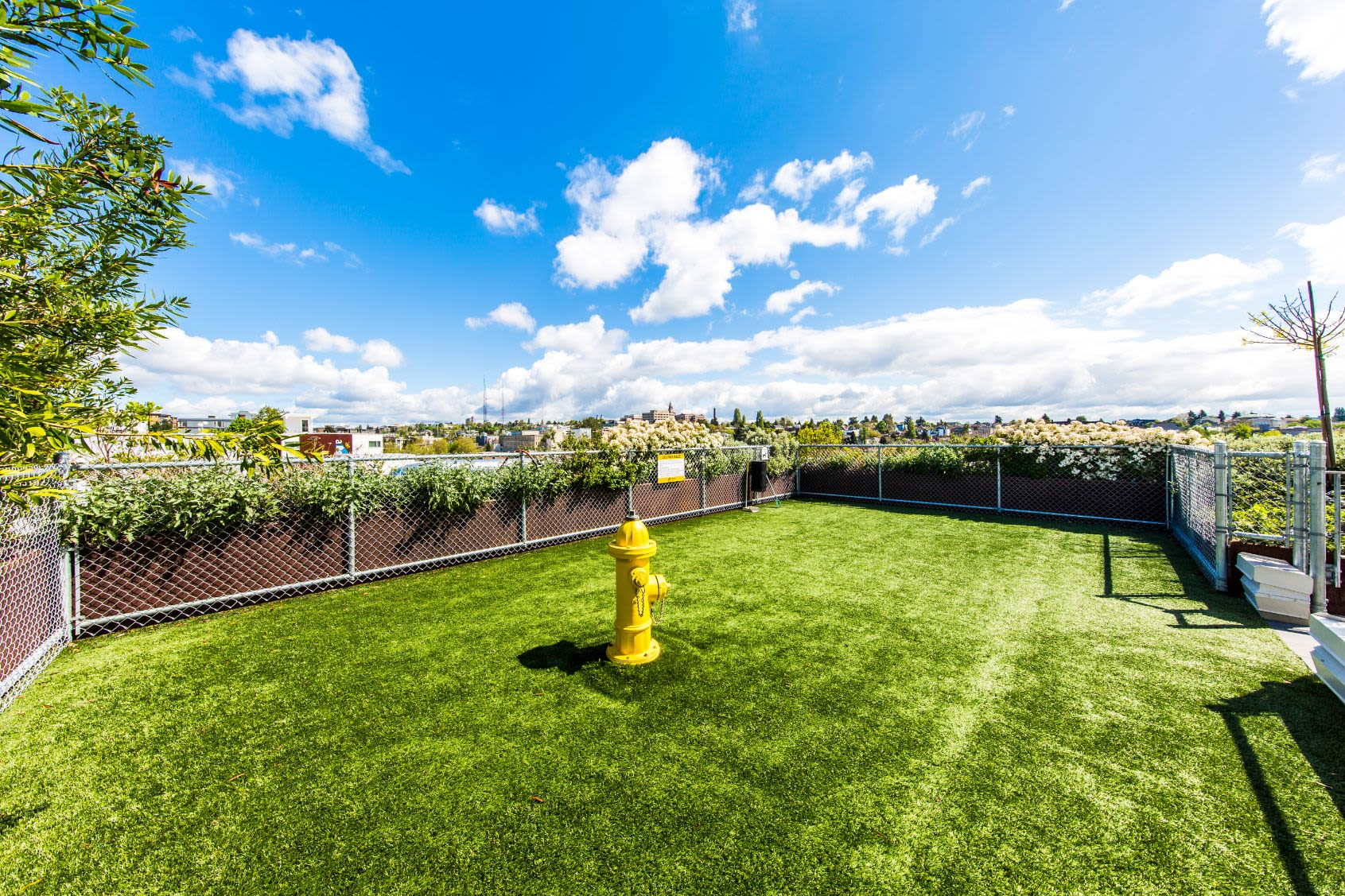 Rooftop dog park at Anthem on 12th in Seattle, Washington