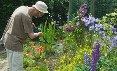 Man gardening at Avalon Assisted Living Community in Fitchburg, Wisconsin