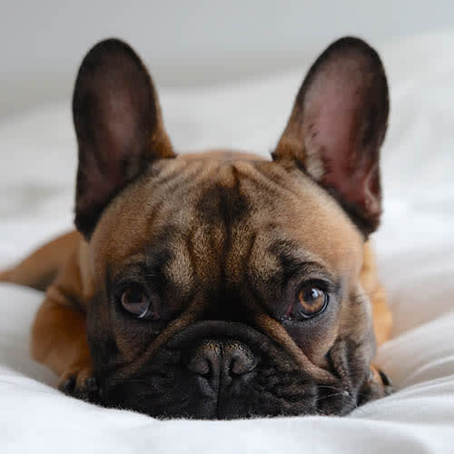 View our pet policy at 45Eighty Dunwoody Apartment Homes in Dunwoody, Georgia