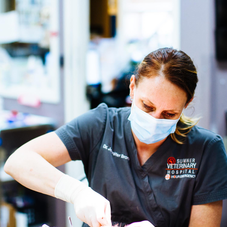 Sumner animal hospital dental care