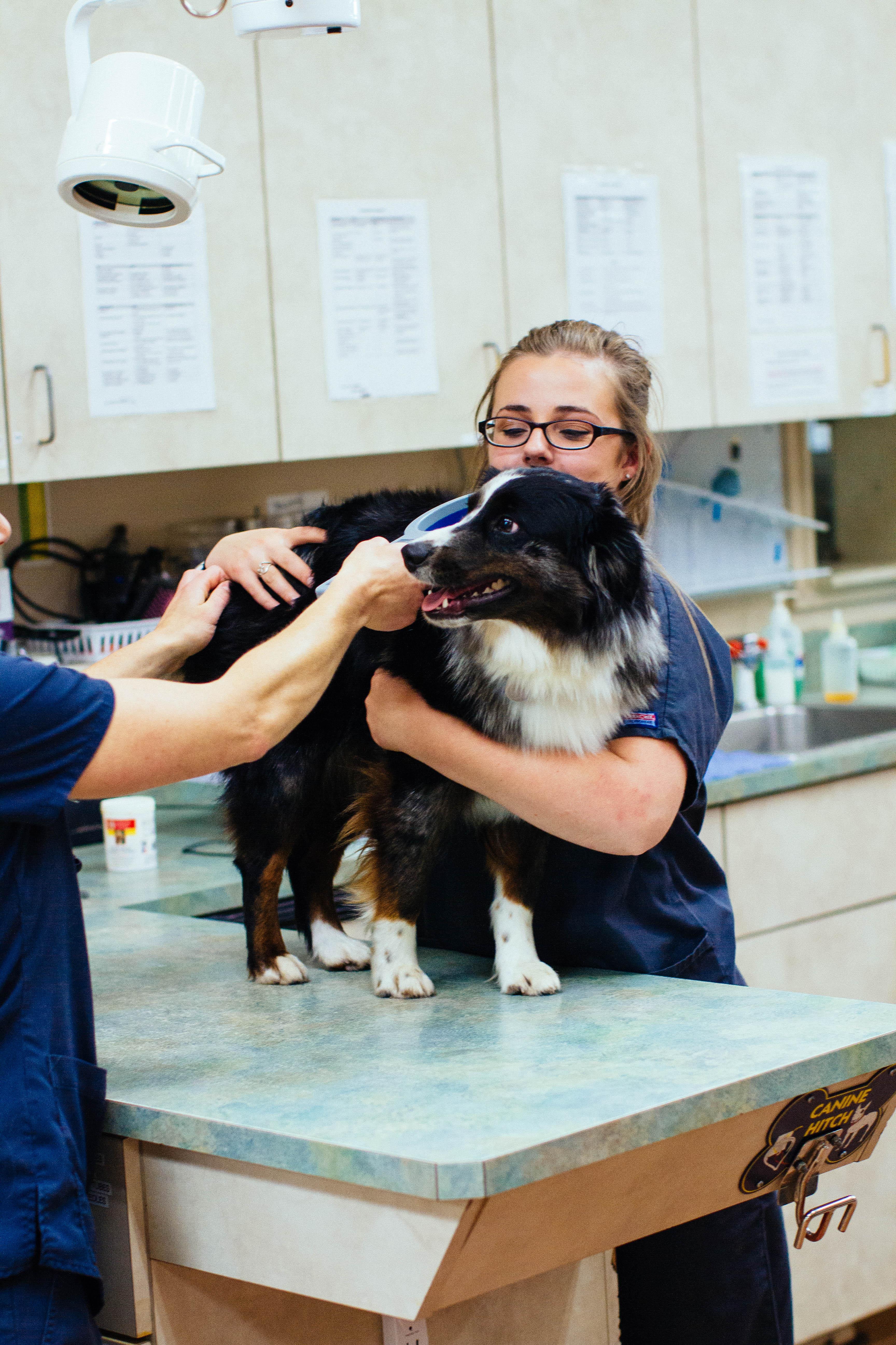 Sumner Animal Hospital microchipping information