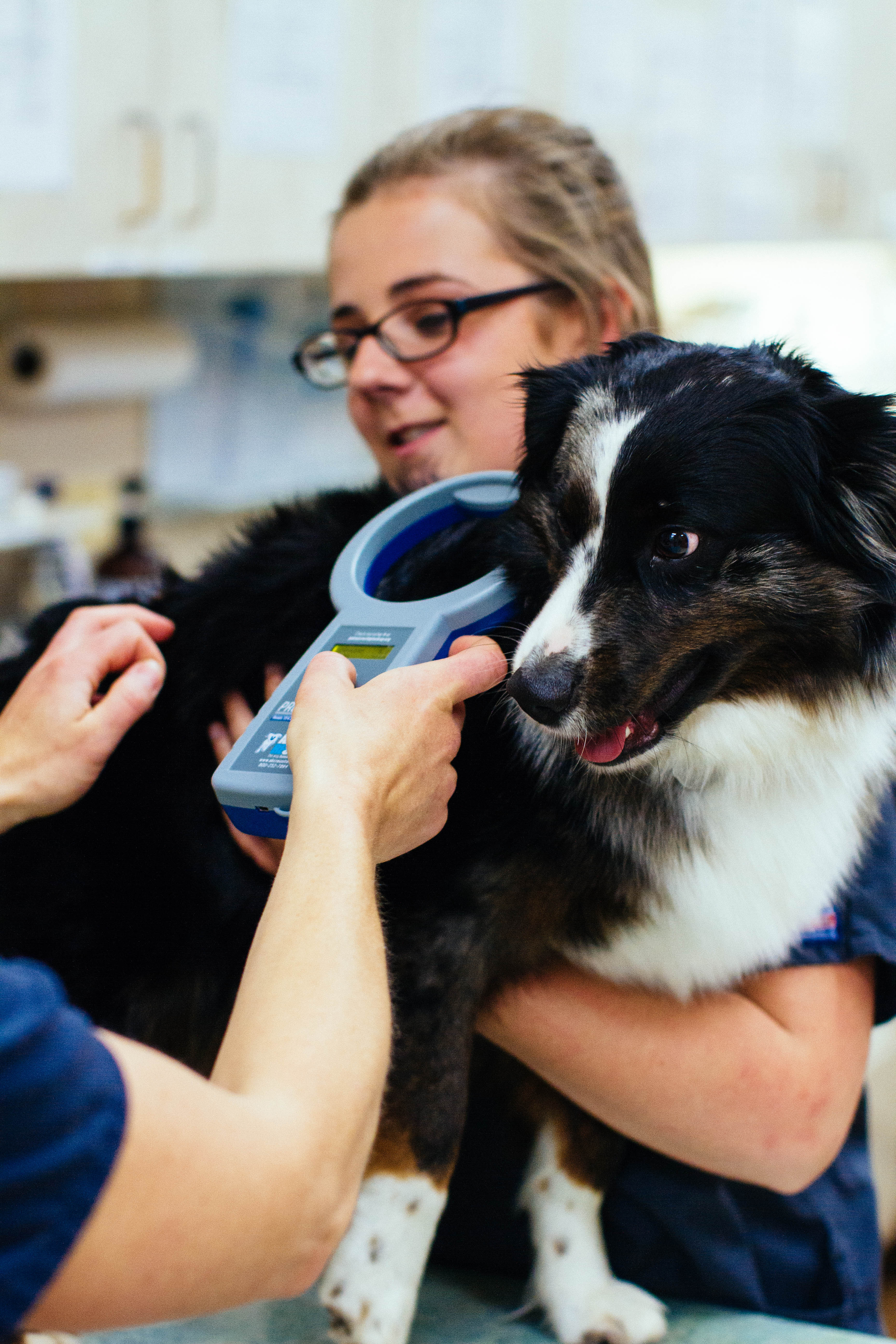 Microchip your pets at Sumner animal hospital
