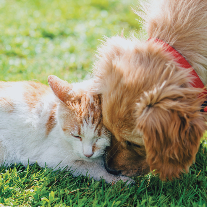 A cat and a dog playing at The Preserve at Forbes Creek in Kirkland, Washington