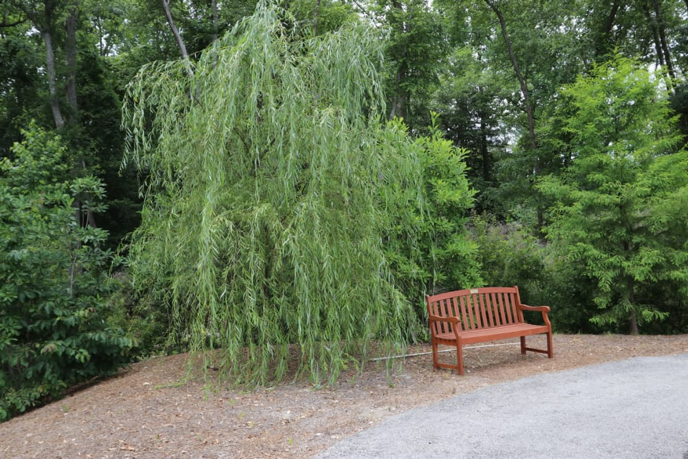 Outdoor seating next to a willow tree at The Harmony Collection at Columbia - Independent Living in Columbia, South Carolina