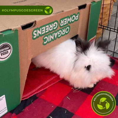 White bunny lounging in a cardboard box