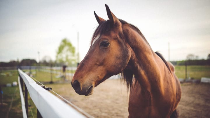 Young horse at a ranch near Union at Carrollton Square in Carrollton, Texas