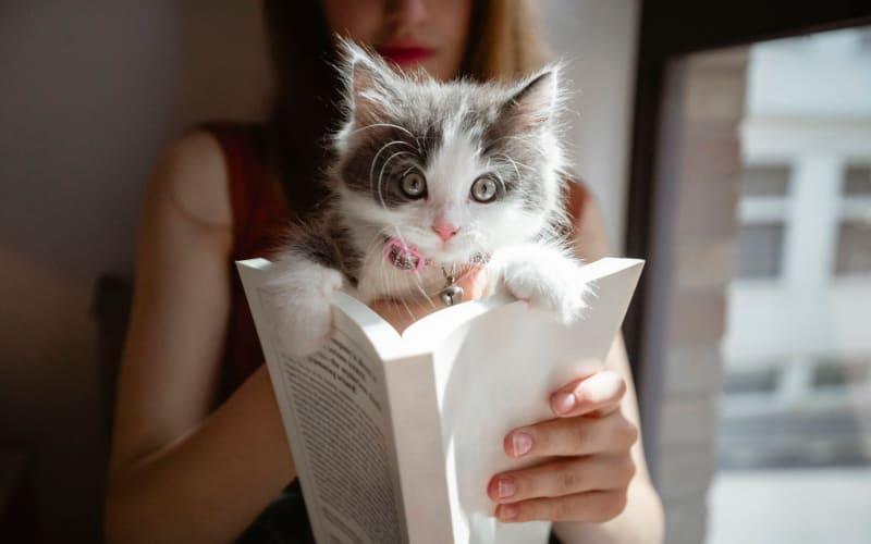 Kitten helping her owner read a book in their home at Pleasanton Glen Apartment Homes in Pleasanton, California