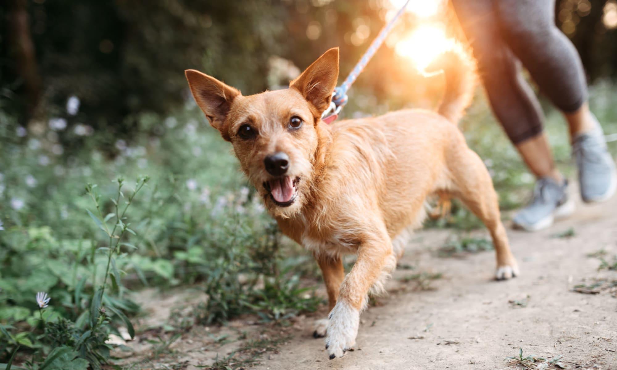 Resident taking her dog for a run near Riata Austin in Austin, Texas