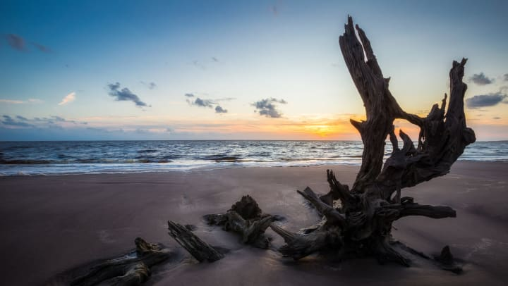 View of driftwood on a sandy beach at sunset.