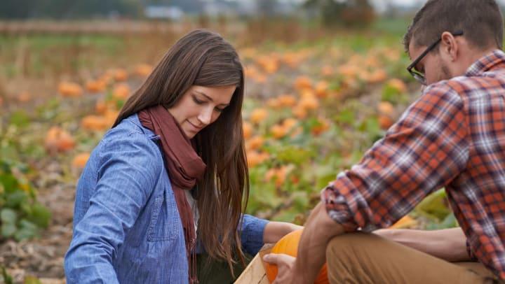 A man and a woman picking out pumpkins at a pumpkin patch near Sundance Creek