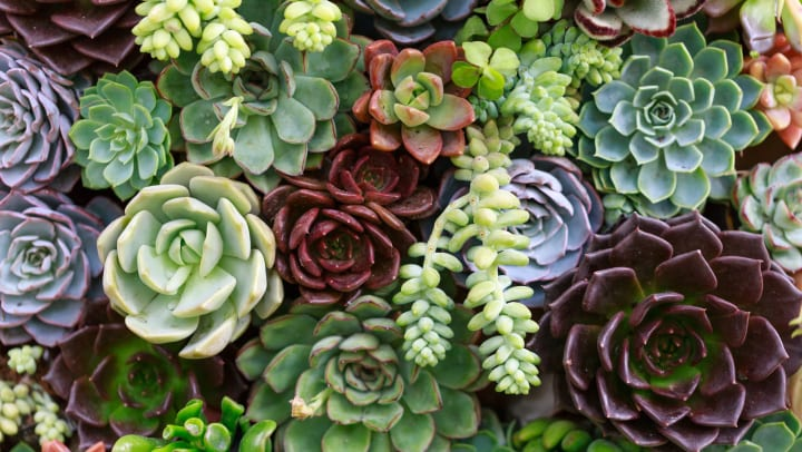 A collection of succulent plants.
