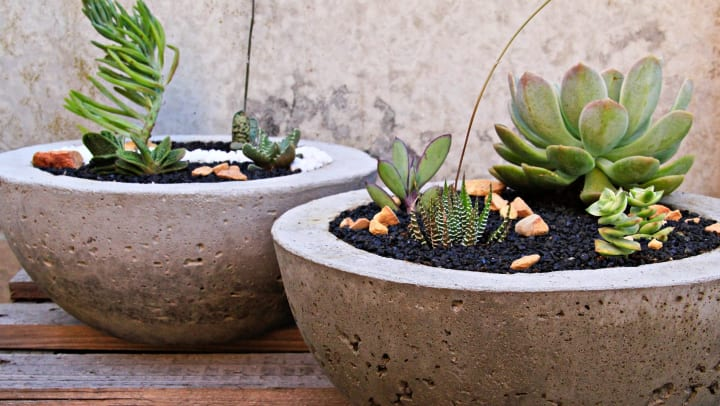 Succulents in decorative planters on a private balcony at Legends at White Oak in Ooltewah, Tennessee