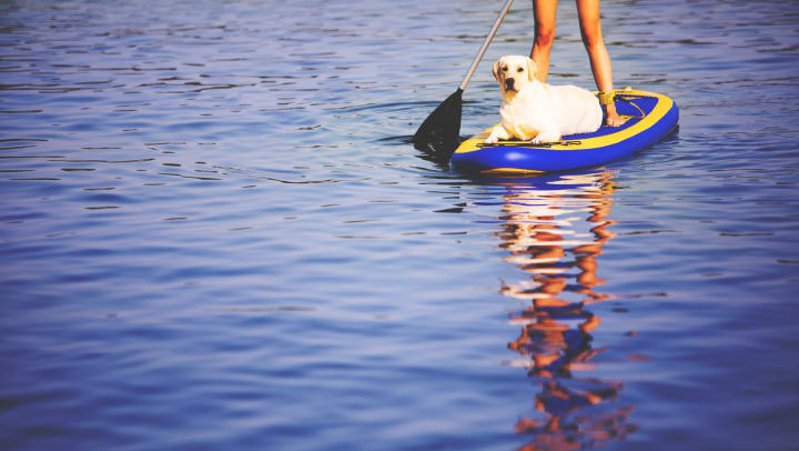 Dog relaxing on a paddleboard with her owner at a lake near Redstone at SanTan Village in Gilbert, Arizona