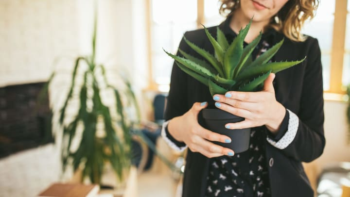Woman in a black blazer holding an aloe vera plant in a sunlit interior