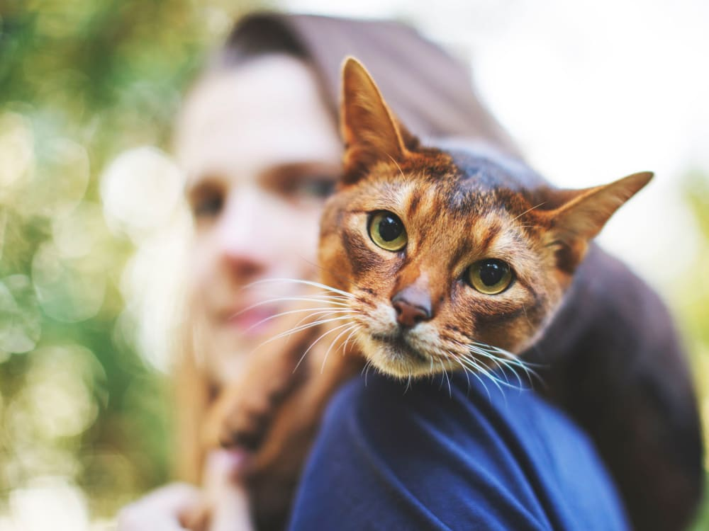 Resident with her cat riding on her shoulder as they take a stroll outside their new home at Citron in Ventura, California