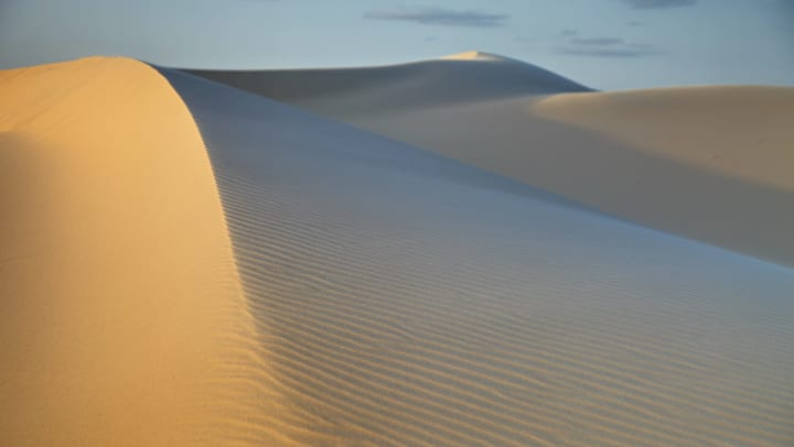 Wind swept sand dunes in the Monahans State Park in Texas