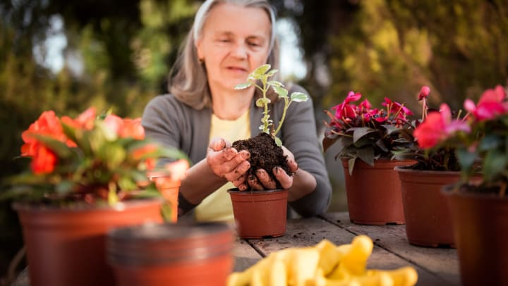 An older woman holds a plant she's just removed from a nursery pot, while several other flowering plants sit on the table in front of her.