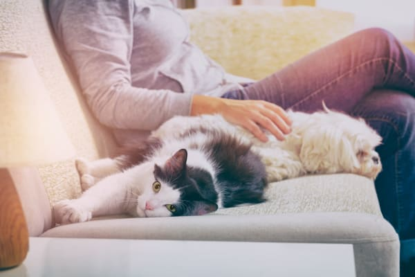 Resident on sofa with dog and cat at Broadstone Toscano in Houston, Texas