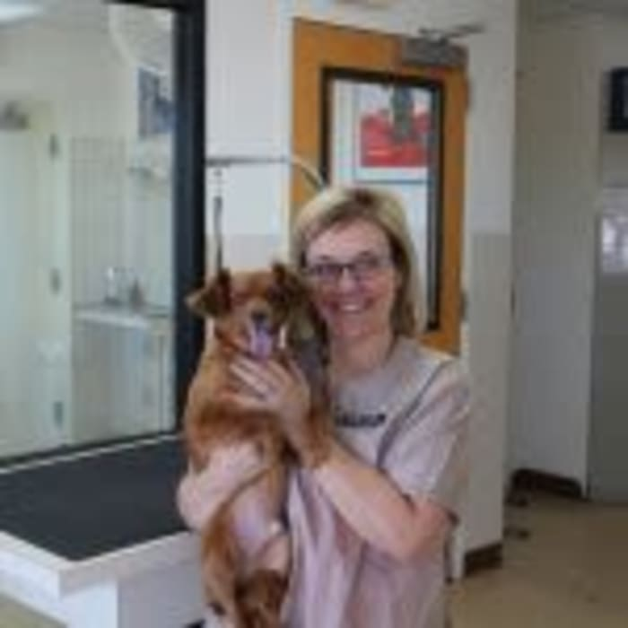 Jackie, groomer at Arizona Avenue Animal Clinic in Chandler, AZ