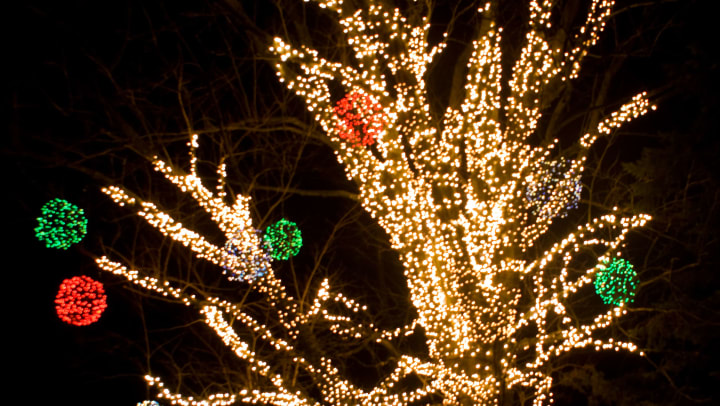 Outdoor tree wrapped in festive lights