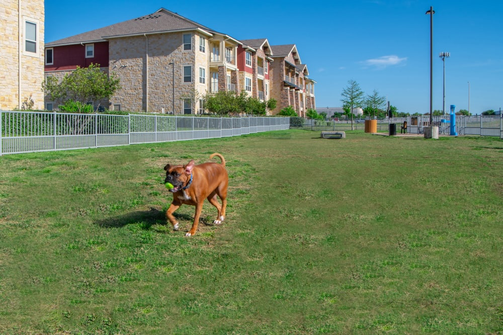 Dog Park at Estates of Richardson in Richardson, Texas