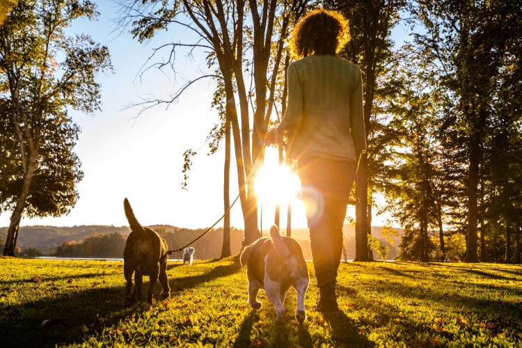 Resident walking dogs in park at 1801 MetroWest in Orlando, Florida