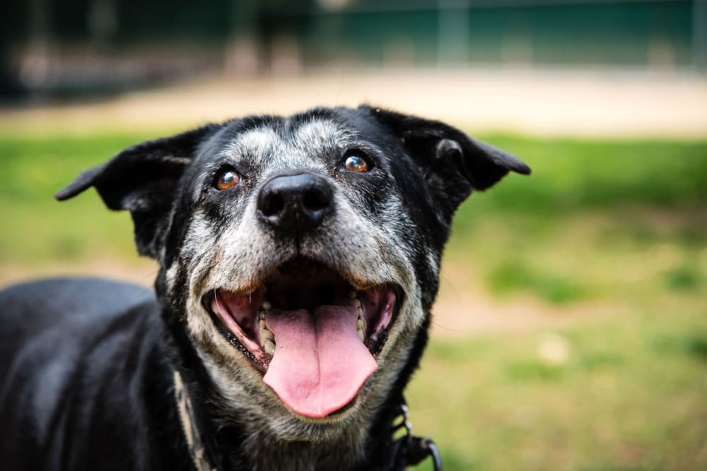 A happy dog at Raintree Terrace in Knoxville, Tennessee.