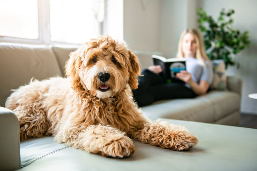 Resident lounging with her dog at home at Celsius Apartment Homes in Charlotte, North Carolina