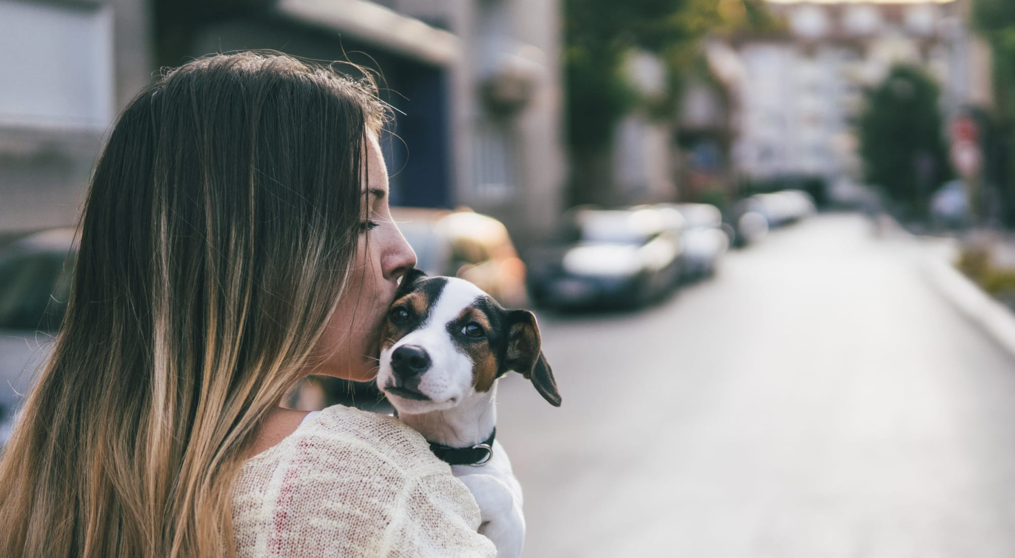 Pet-friendly apartments at Haven Warner Center in Canoga Park, California