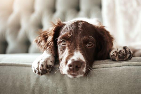 Cute dog at Halcyon House in Denver, Colorado