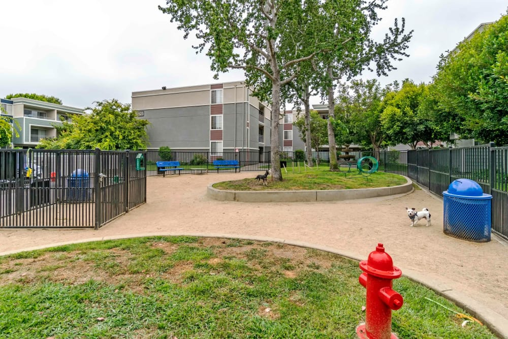 Resident dog park at Summer House Apartments