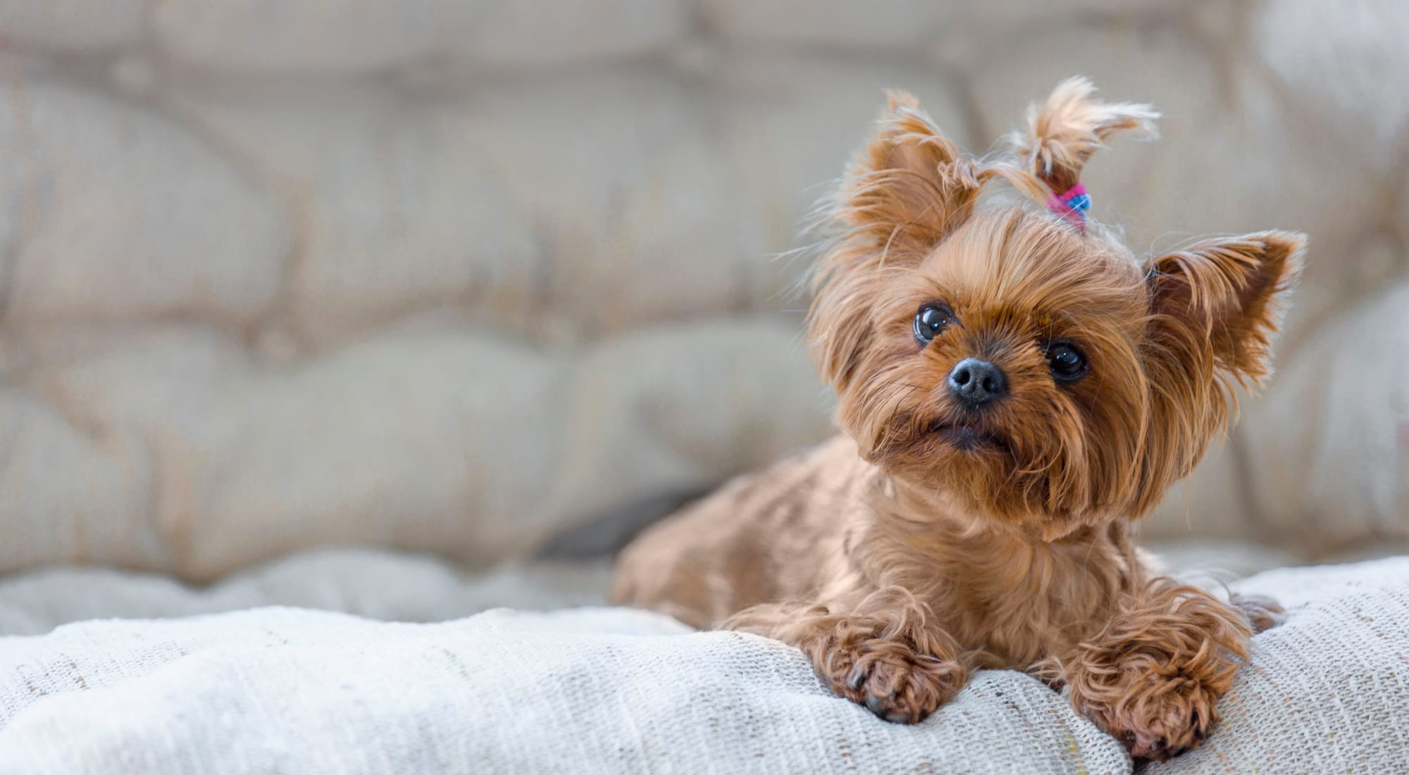 Pet-friendly apartments at The Landmark Apartment Homes in Sunnyvale, California