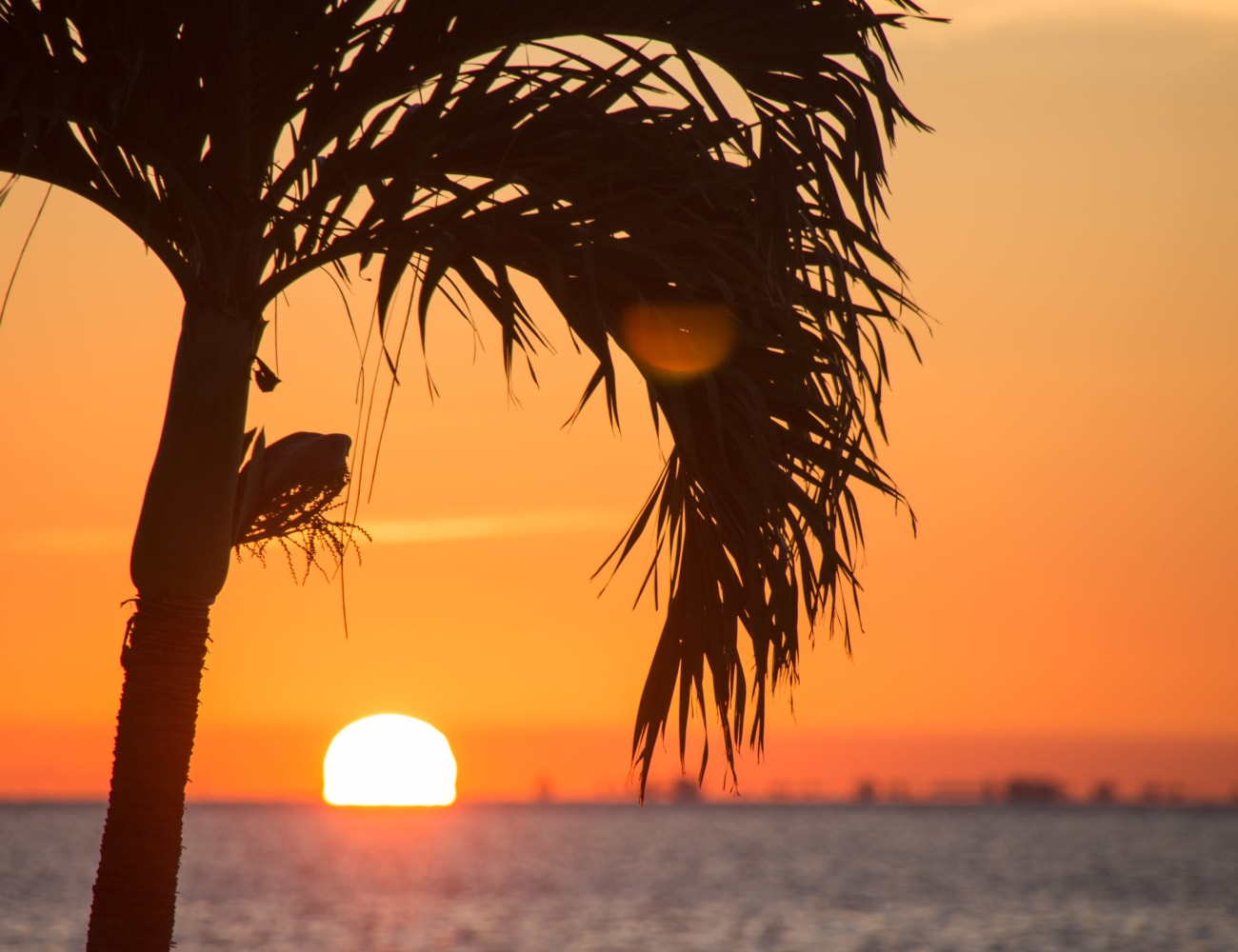 A beautiful palm tree at sunset near The Braxton in Palm Bay, Florida
