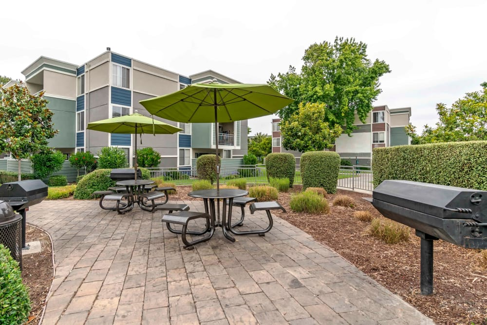Resident BBQs and picnic tables at Summer House Apartments