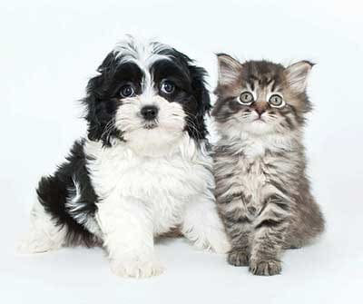 Cute dog and cat at The Waterfront in Munhall, Pennsylvania