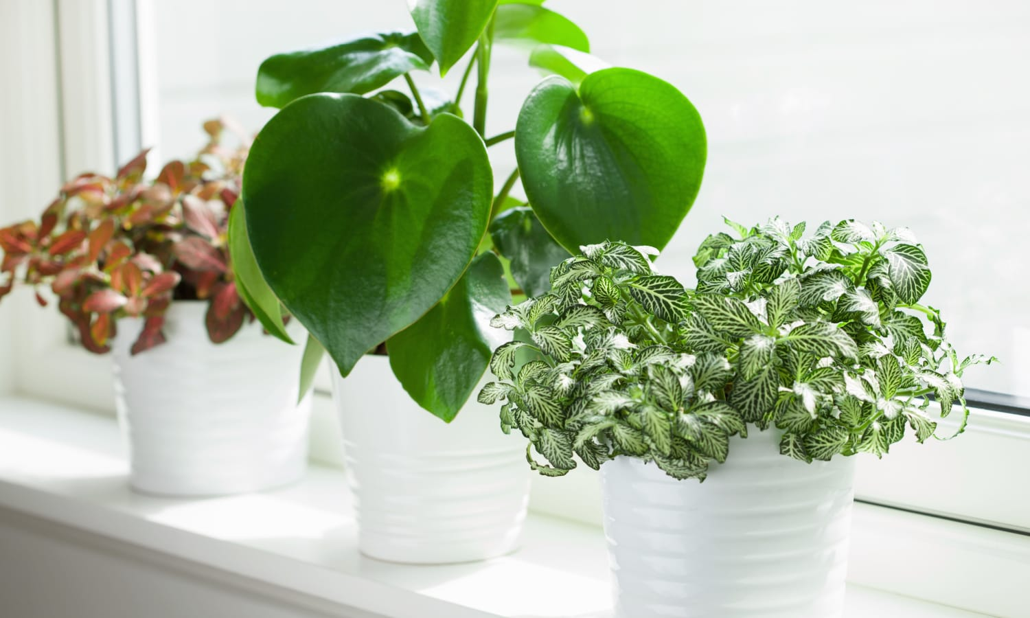 Group of potted plants on window sill at Arbors Memory Care in Sparks, Nevada