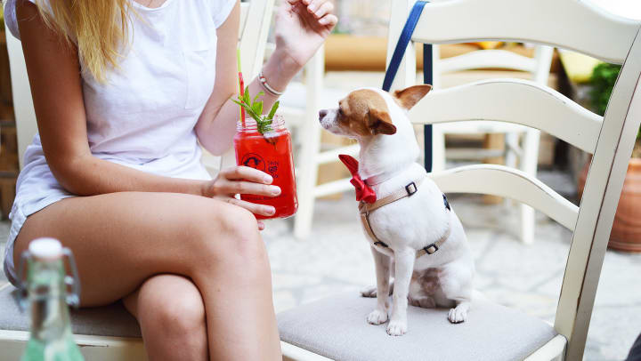 Dog and owner enjoying happy hour at a restaurant near Redstone at SanTan Village in Gibert, Arizona.