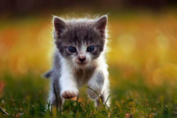 Kitten running through grass at Cornerstone Ranch Apartments in Katy, Texas