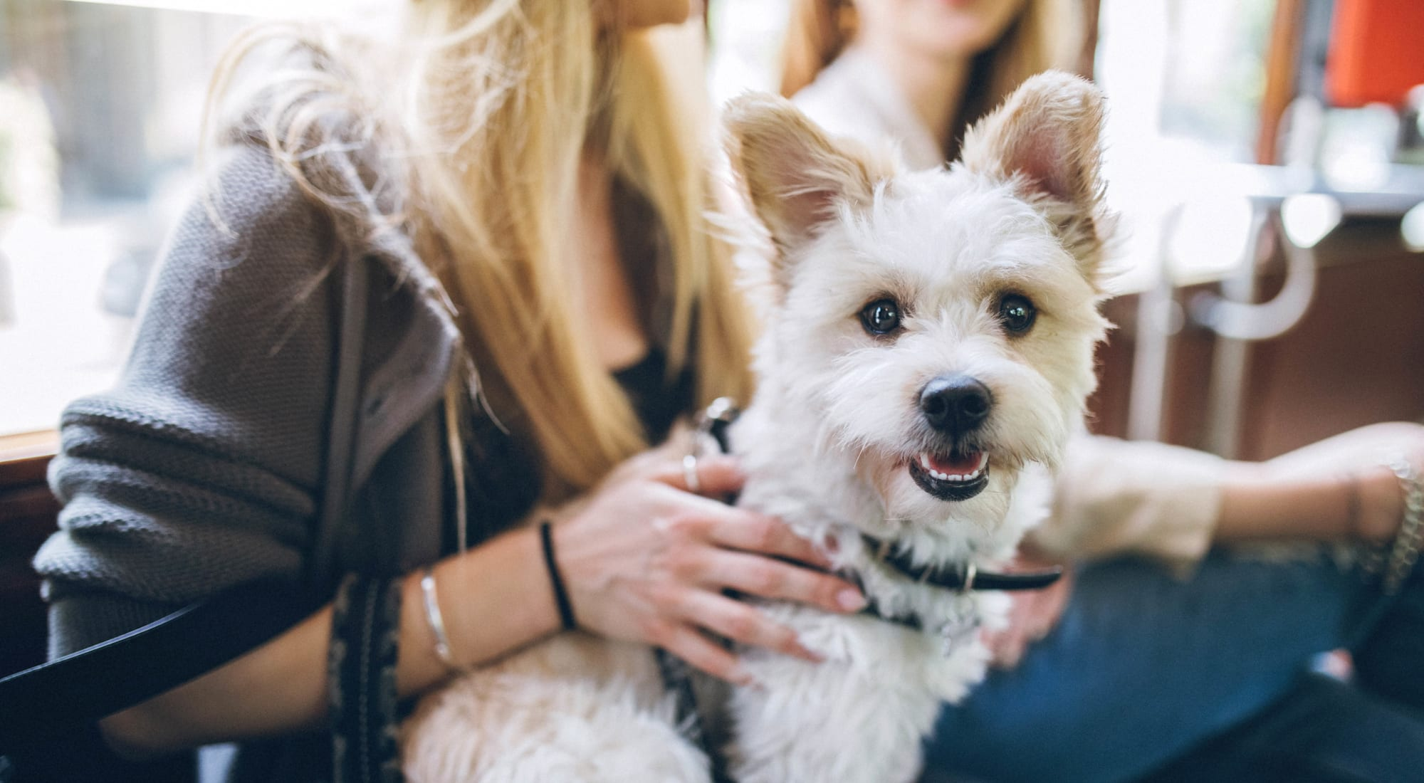 Pet-friendly apartments at Foundations at River Crest & Lions Head in Sugar Land, Texas