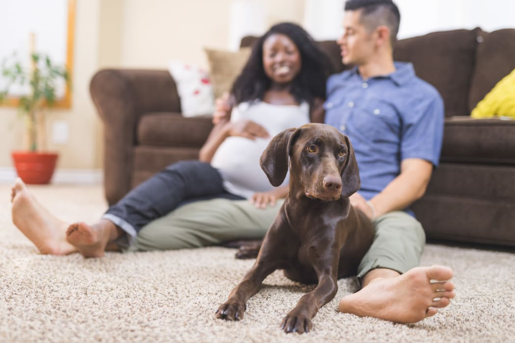 Husband and pregnant wife sitting together with their dog in their home at Palmetto at Tiburon View in Tiburon, California