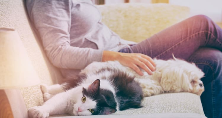 Resident and her pets relaxing in their new home at Meritage at Steiner Ranch in Austin, Texas
